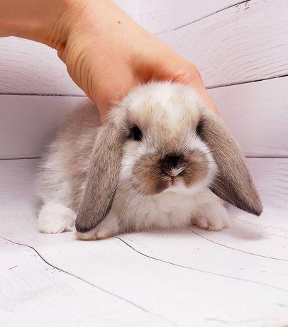 Карликовые вислоухие мини кролики,вислоухие баранчики и клетки,корма