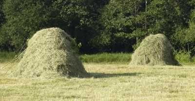 Użyczę łąki pod sianokosy.