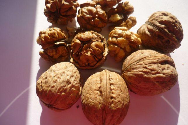 Тонкокорый орех этого года