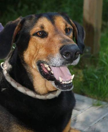Bolek - wspaniały psi przyjaciel
