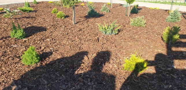 Kora ogrodowa kompostowana