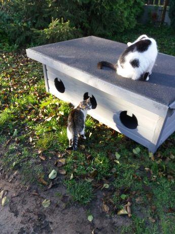 Domek ,buda dla kotów xxl