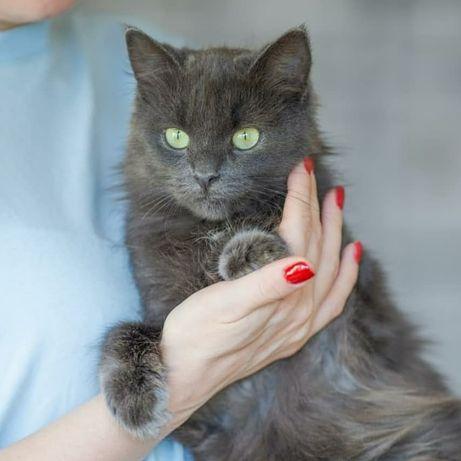 Люся, 7 мес, кошка, кошечка, котенок