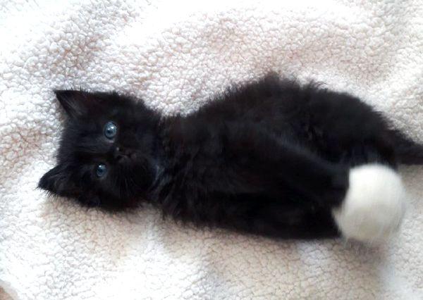Красивые обаятельные маленькие пушистые котята