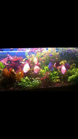 Полностью укомплектованный аквариум
