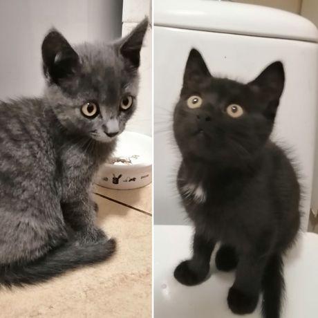 Две девочки ищут дом! 2,5 месяца.