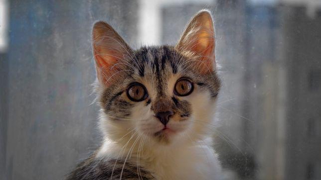 4 красивых котёнка в хорошие руки