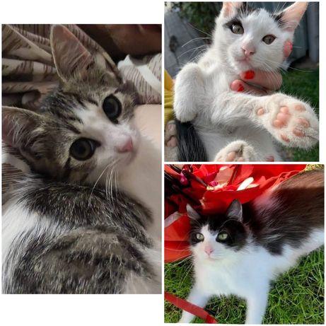 Котята коти кошенята в добрі руки 4 місяці