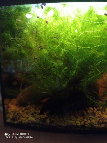 Rośliny żywe do akwarium