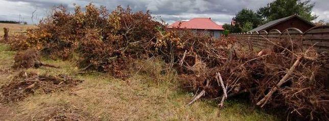 Opał , gałęzie i korzenie