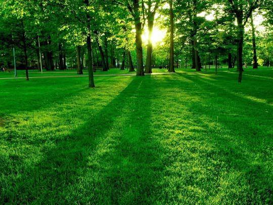 Лечение травами, рекомендации по лечению