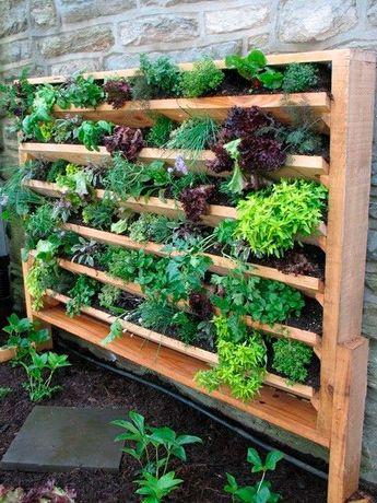 Jardineiro - Limpeza e manutenção de jardins e Hortas biológicas