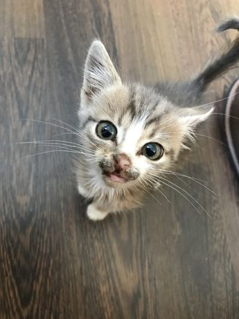 шукаю дім кошеня