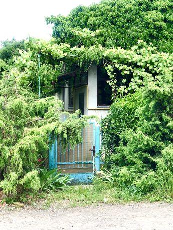 Любите зелень, тоді будинок для Вас!