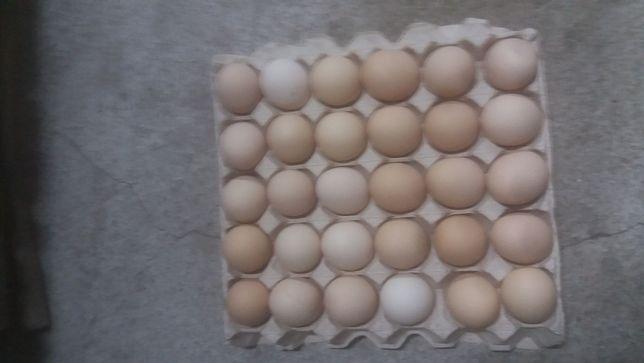 jajka kremowe
