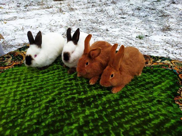 Продам кроликів різного віку.