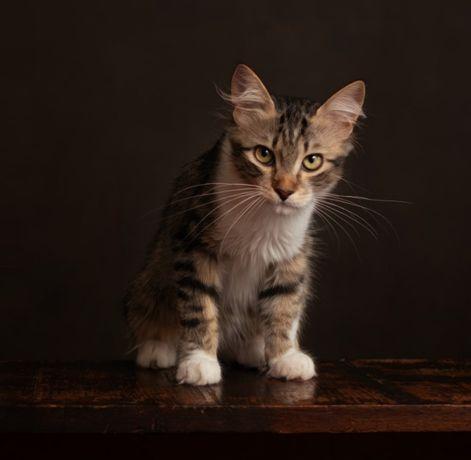 Трое невероятно красивых котят, 4 месяца