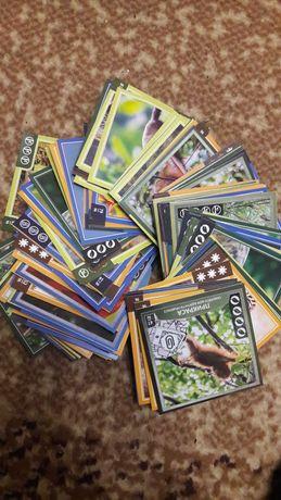 Карточки зверокуб