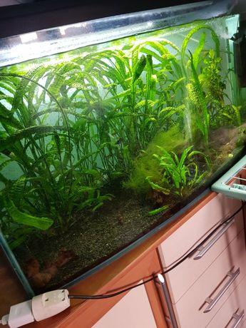Akwarium 200l panoramiczne