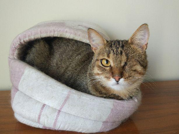 Душевная умная кошка 1 год стерилизована