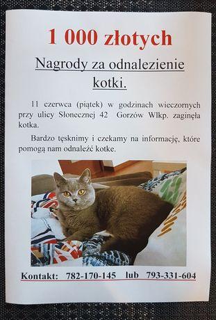 Zaginął koteczek !!   1 000 zł nagrody !!!