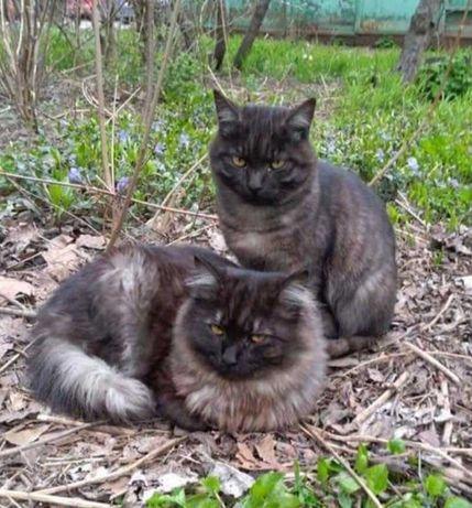 2 шикарных кошка и кот
