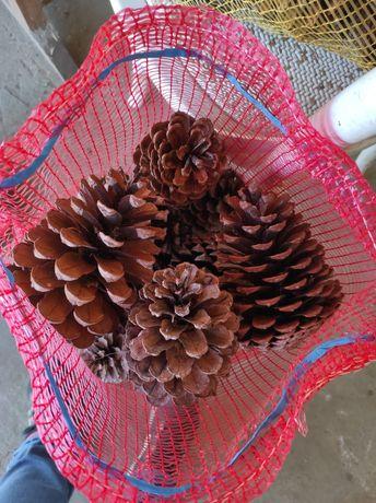 Sacos de pinhas por 3€