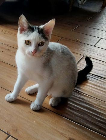 Kotka młoda półroczna