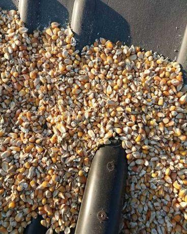 Продам отхода кукурузы.