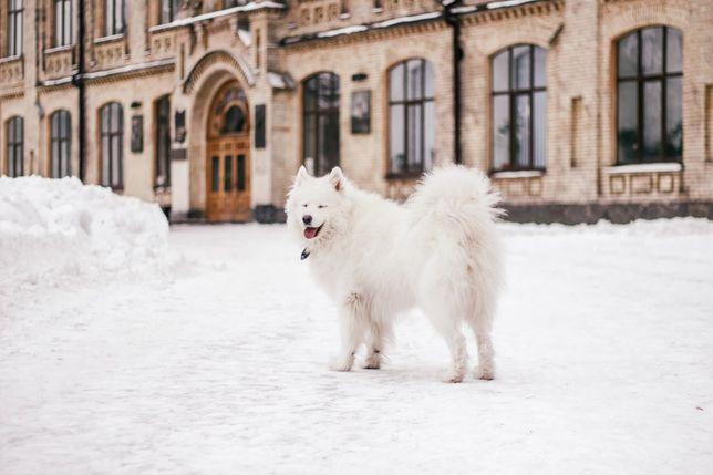 Большая белая собачка для Вашей фотосес,Киев парки Политеха и Орлятко