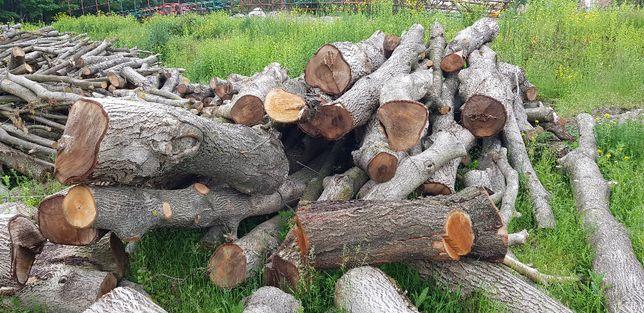 Orzech włoski drewno 30m3
