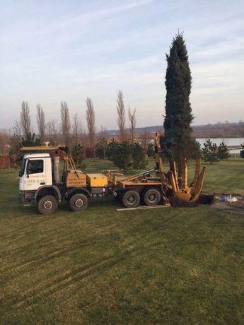 Аренда техники пересадка больших деревьев