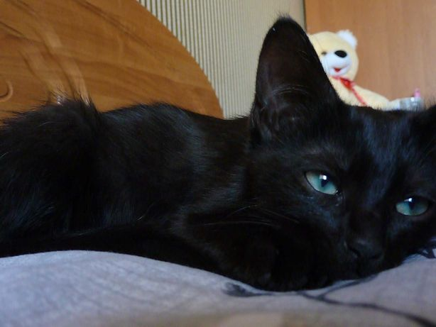 Черный кот, который хочет попасть в любящую семью