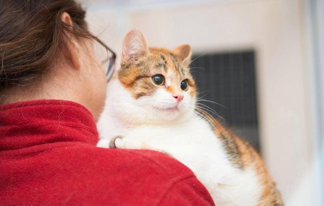 Кошка Жасмин в поисках семьи!