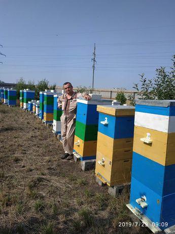 Пчеломатки. Пчелопакеты. Матки с Германии.