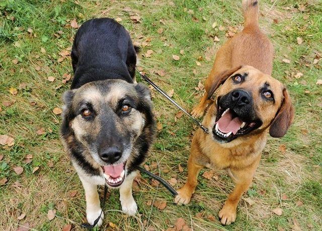 Suczka i pies szukają najlepiej wspólnie kochającego domu