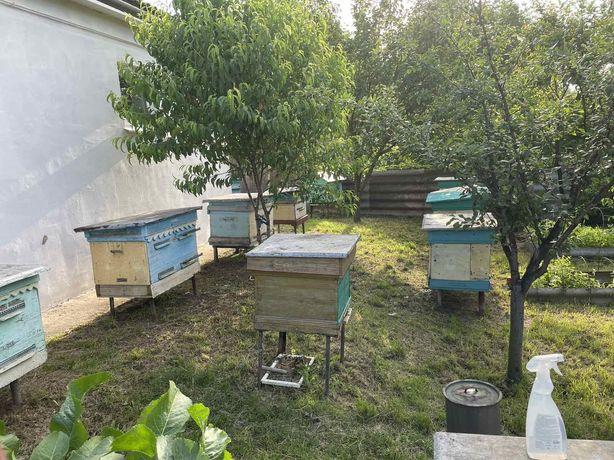 Продам пчел вместе с ульями