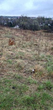 Oddam za darmo ścięte gałęzie na działce 10 arów w Olsztynie