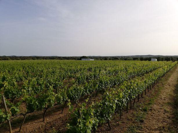 Propriedade rural com vinha