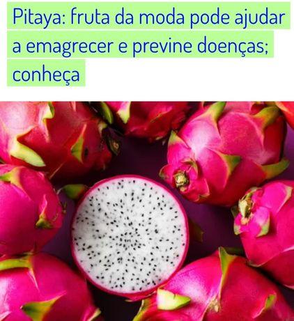 Sementes de pitaya vermelha de polpa branca (BIOLÓGICA)