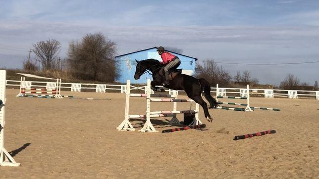 Лошадь, жеребец, кобыла, конь конкур/Выездка Адель