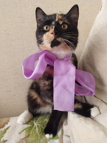Кошка 6 месяцев в хорошие руки