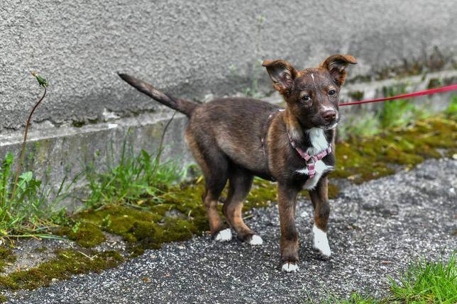 Choco szuka domu