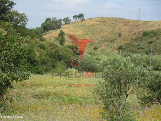 Terreno rústico com parte plana com olival e colina