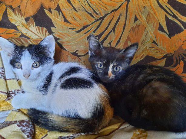 Отдам в заботливые руки Котята домашней кошки