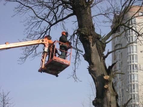 валка деревьев донецк 0713060672