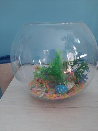 Kula dla rybki z akcesoriami
