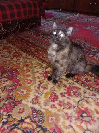 Стерилизованная кошка в хорошие руки бесплатно. Котенок даром. Срочно.