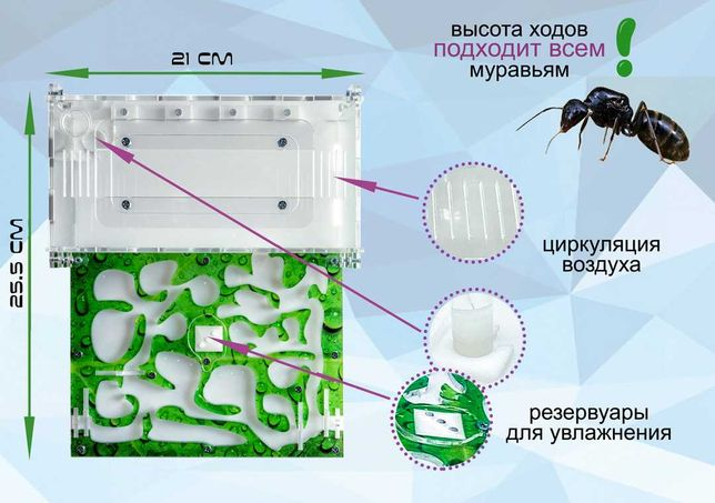 "Муравьиная ферма формикарий Standart ""лист"" для муравьев Жнецов"