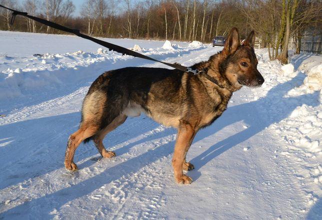 Aleks - piękny pies w rozmiarze M do adopcji